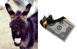 Donkey cash on fire